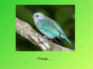 Птица…..