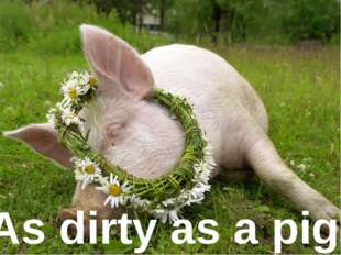 As dirty as ... As dirty as a pig