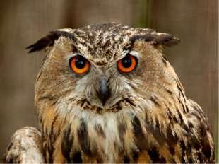 It is a very wise bird.