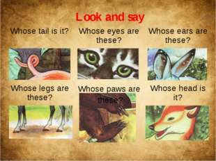 Look and say Whose paws are these? Whose tail is it? Whose eyes are these? Wh