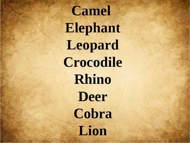 Camel Elephant Leopard Crocodile Rhino Deer Cobra Lion