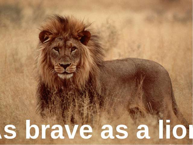 As brave as ... As brave as a lion