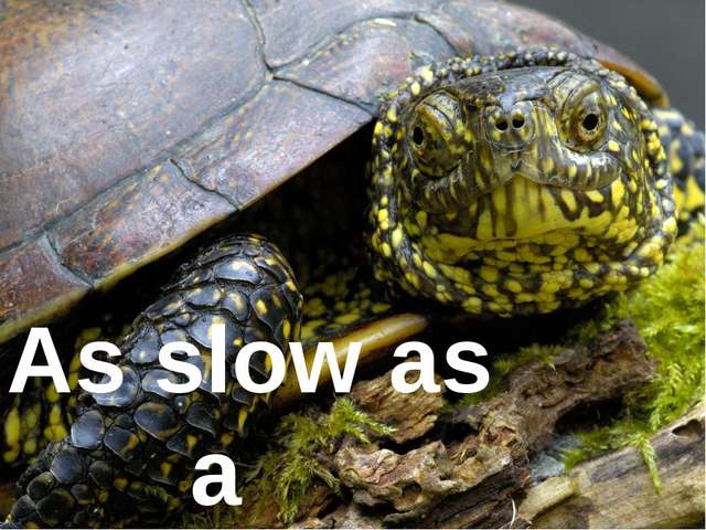 As slow as ... As slow as a tortoise