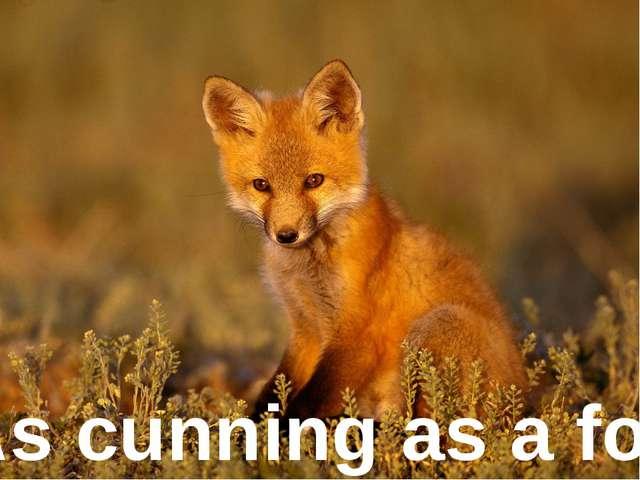 As cunning as ... As cunning as a fox