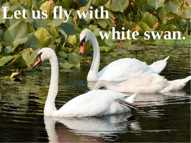 Let us fly with white swan.