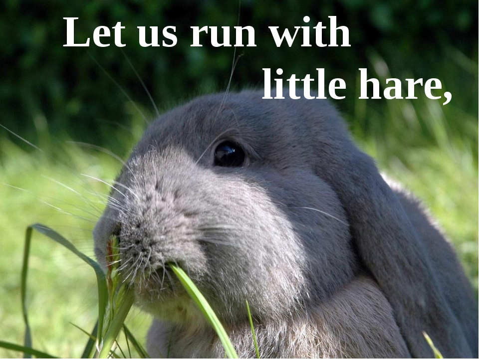 Let us run with little hare,