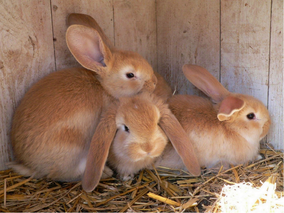 Long-ears, long-ears, Hop, hop, and hop! Long-ears, long-ears, Never stop. T...