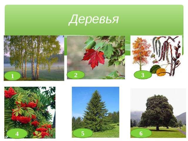 Деревья 1 2 3 4 6 5