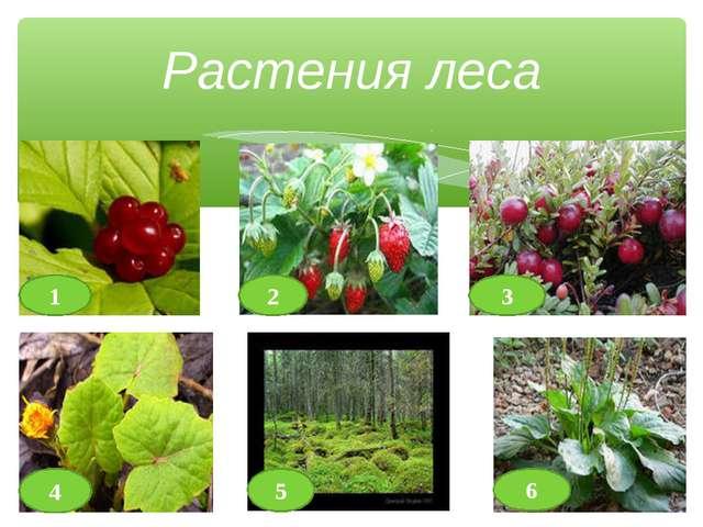Растения леса 1 2 3 4 5 6