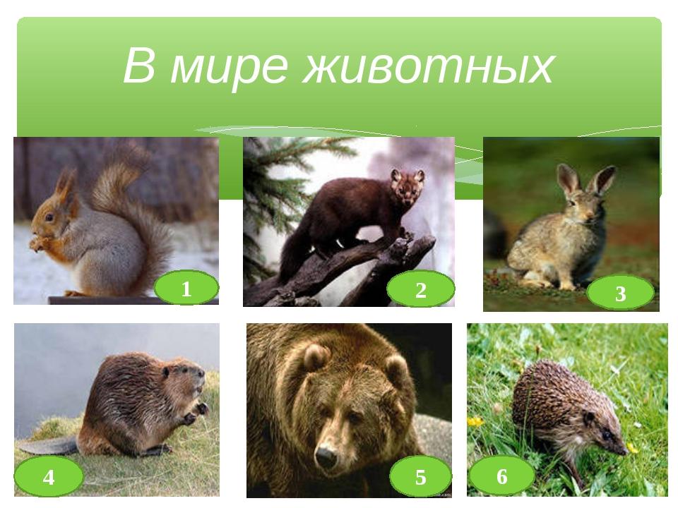 В мире животных 1 3 5 6 2 4