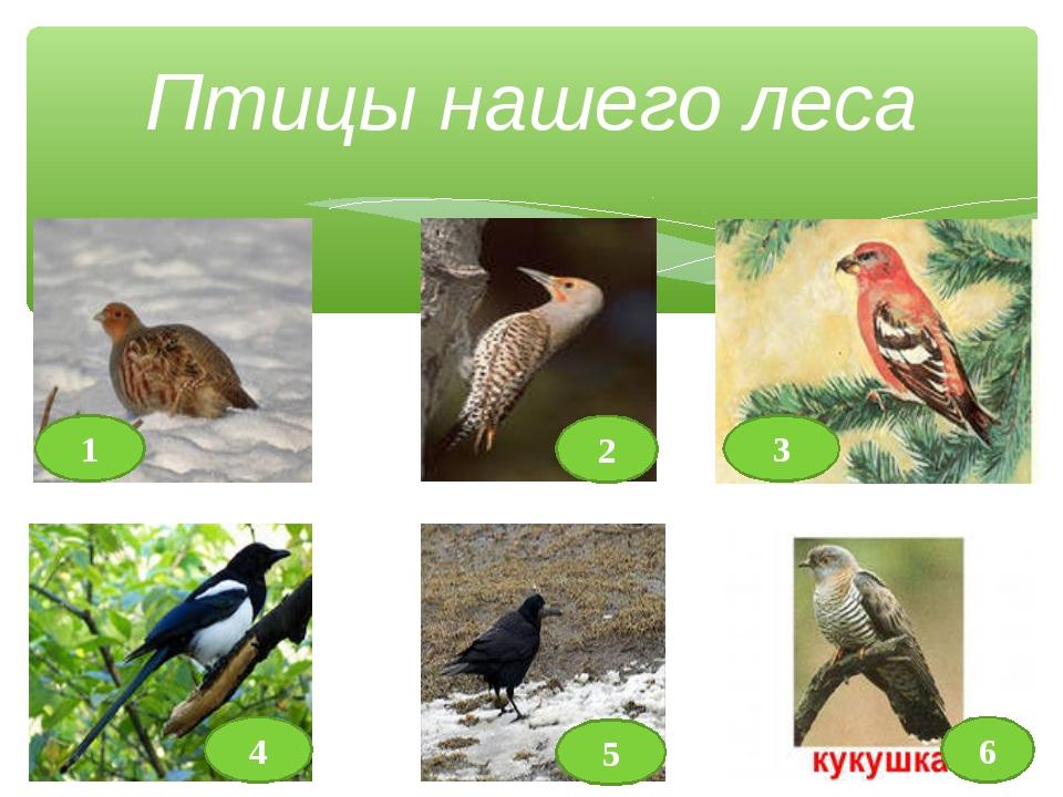Птицы нашего леса 2 1 3 4 5 6