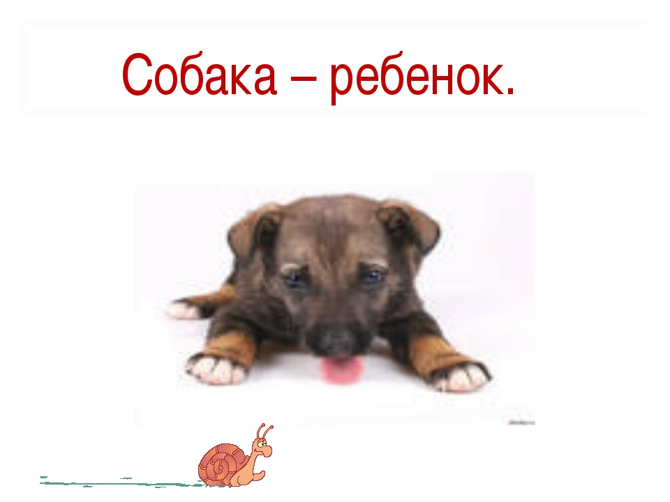 Собака – ребенок.