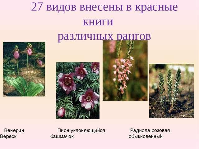 27 видов внесены в красные книги различных рангов Венерин Пион уклоняющийся Р...