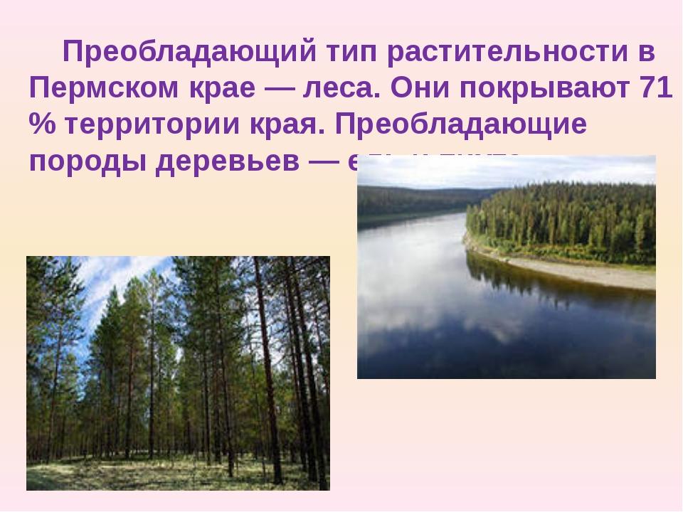 Преобладающий тип растительности в Пермском крае — леса. Они покрывают 71 % т...