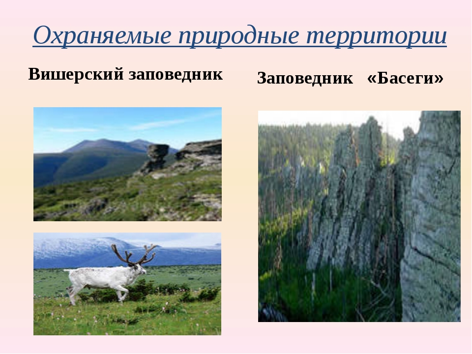 Охраняемые природные территории Вишерский заповедник Заповедник «Басеги»