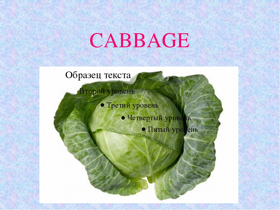 CABBAGE 11.10.10