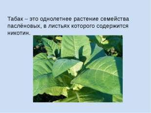 Табак – это однолетнее растение семейства паслёновых, в листьях которого соде
