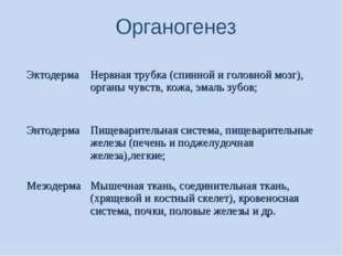 Органогенез ЭктодермаНервная трубка (спинной и головной мозг), органы чувст