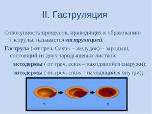 II. Гаструляция Совокупность процессов, приводящих к образованию гаструлы, на