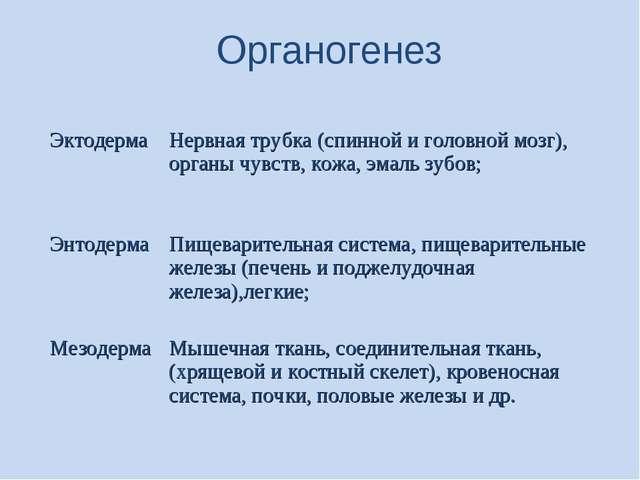 Органогенез ЭктодермаНервная трубка (спинной и головной мозг), органы чувст...
