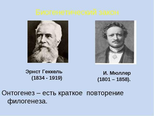 Биогенетический закон Онтогенез – есть краткое повторение филогенеза. И. Мюлл...