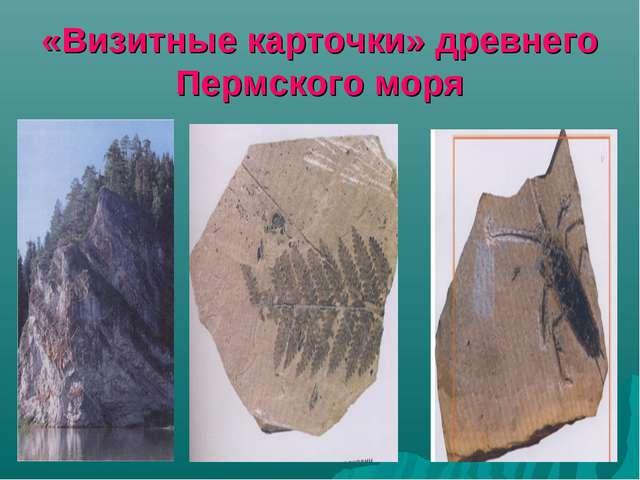 «Визитные карточки» древнего Пермского моря