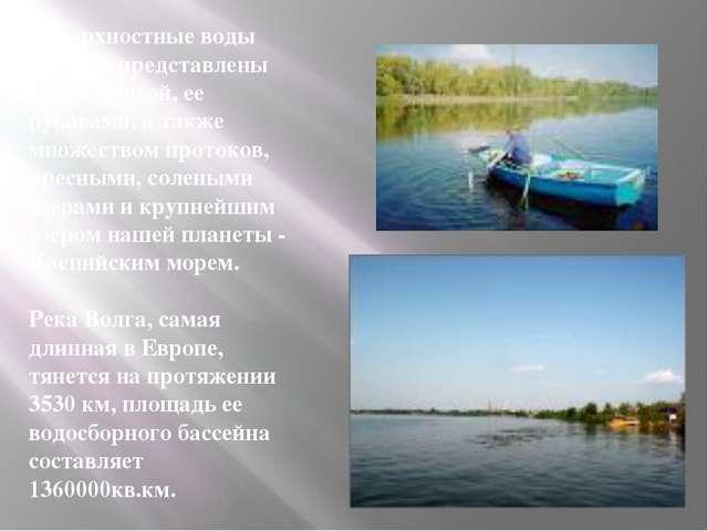 Поверхностные воды области представлены рекой Волгой, ее рукавами, а также мн...