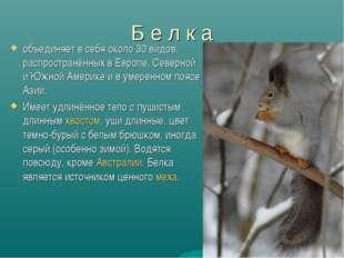 Б е л к а объединяет в себя около 30 видов, распространённых в Европе, Северн