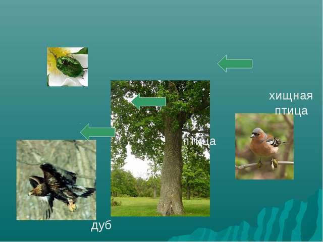 дуб жук птица хищная птица