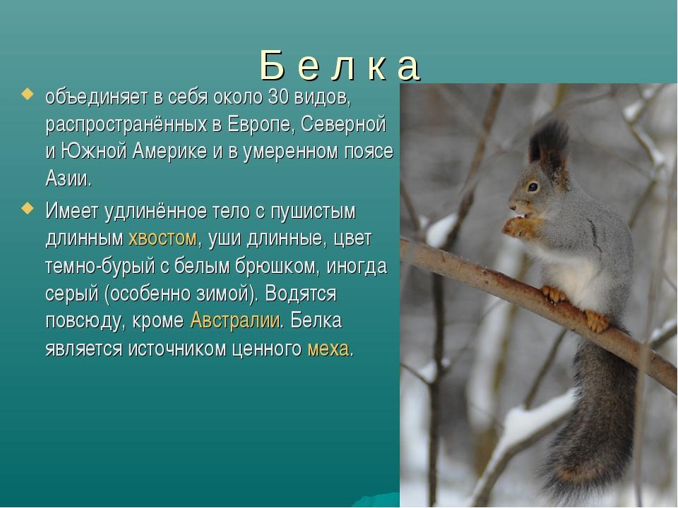 Б е л к а объединяет в себя около 30 видов, распространённых в Европе, Северн...