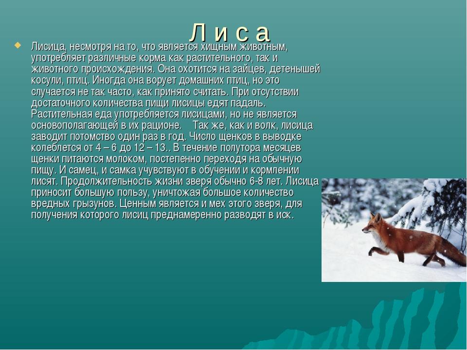 Л и с а Лисица, несмотря на то, что является хищным животным, употребляет раз...