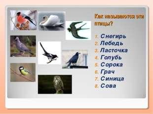 Как называются эти птицы? Снегирь Лебедь Ласточка Голубь Сорока Грач Синица