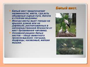 Белый аист. Белый аист предпочитает низменности, места, где есть обширные сыр