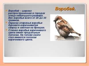Воробей. Воробей – широко распространенная в городах птица небольшого размера