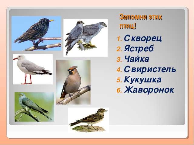 Запомни этих птиц! Скворец Ястреб Чайка Свиристель Кукушка Жаворонок