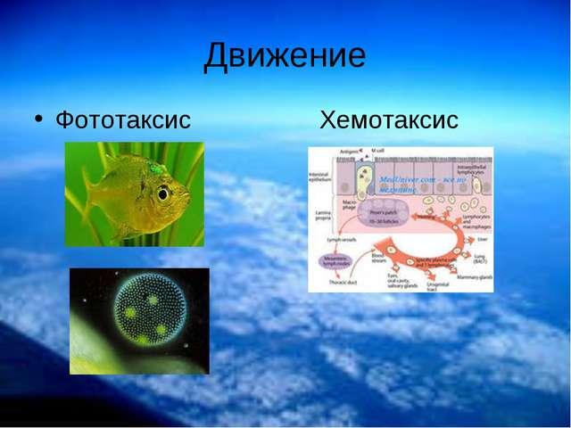 Движение Фототаксис Хемотаксис