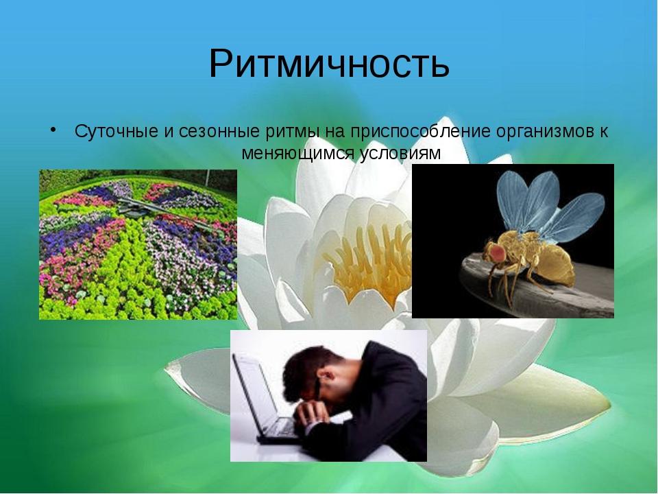 Ритмичность Суточные и сезонные ритмы на приспособление организмов к меняющим...