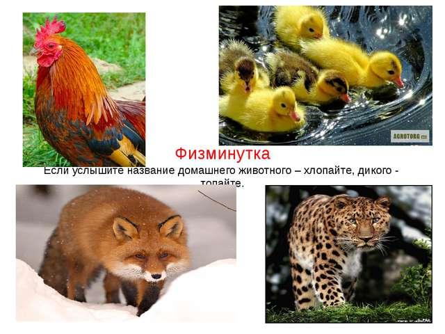 Физминутка Если услышите название домашнего животного – хлопайте, дикого - то...