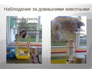 Наблюдение за домашними животными