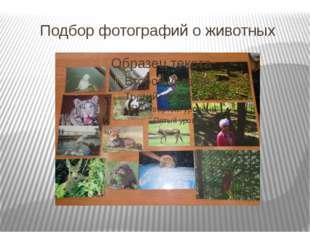 Подбор фотографий о животных