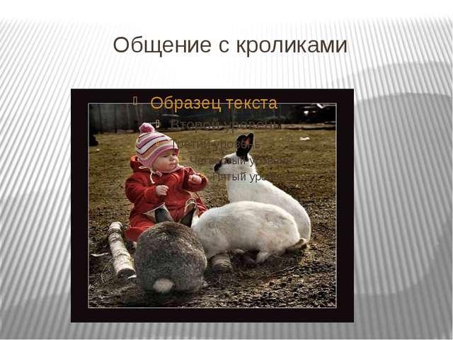 Общение с кроликами