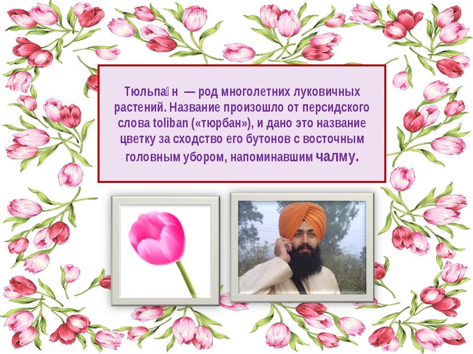 Тюльпа́н — род многолетних луковичных растений. Название произошло от персидс...