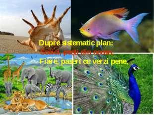 Dupre sistematic plan: Scoici, peşti din ocean, Fiare, paseri cu ver