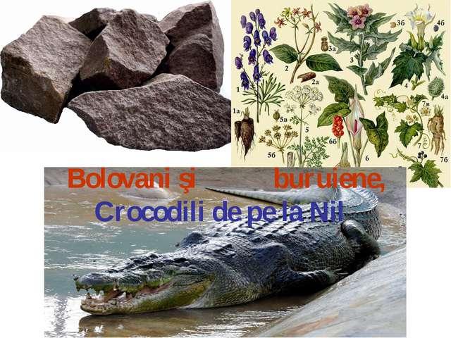 Bolovani şi buruiene, Crocodili de pe la Nil