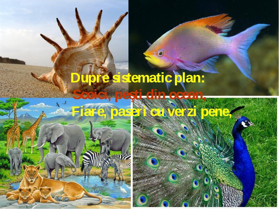 Dupre sistematic plan: Scoici, peşti din ocean, Fiare, paseri cu ver...