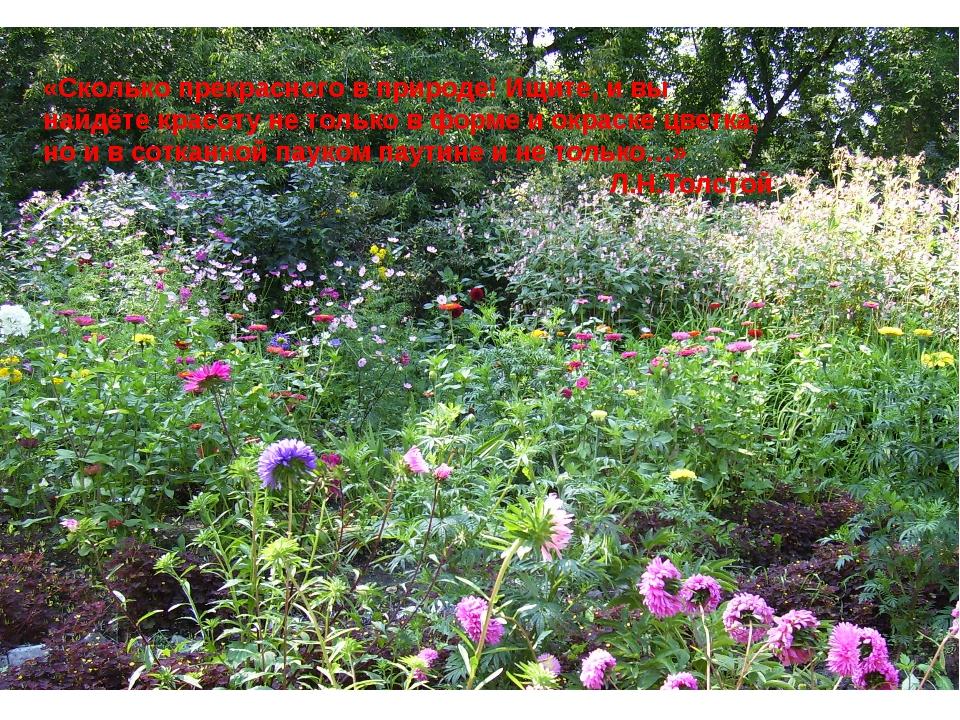 «Сколько прекрасного в природе! Ищите, и вы найдёте красоту не только в форме...