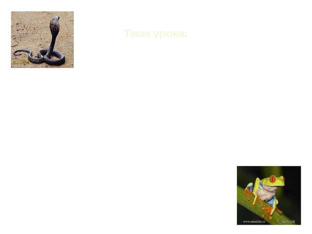 Тема урока: «Класс земноводные или амфибии» «Класс пресмыкающиеся или рептил...