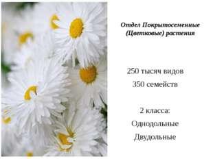 Отдел Покрытосеменные (Цветковые) растения 250 тысяч видов 350 семейств 2 кл