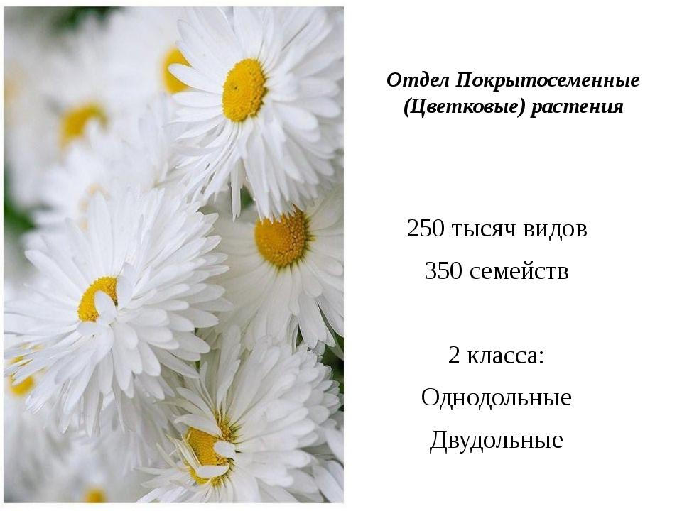 Отдел Покрытосеменные (Цветковые) растения 250 тысяч видов 350 семейств 2 кл...