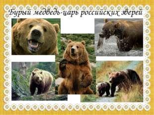 Бурый медведь-царь российских зверей